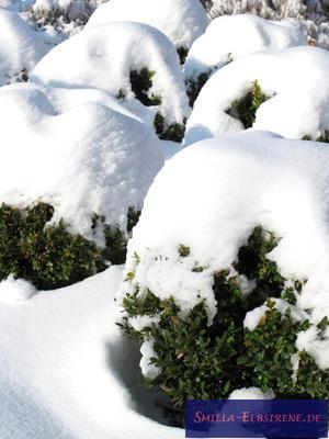 Buchsbaumkugeln mit Schnee