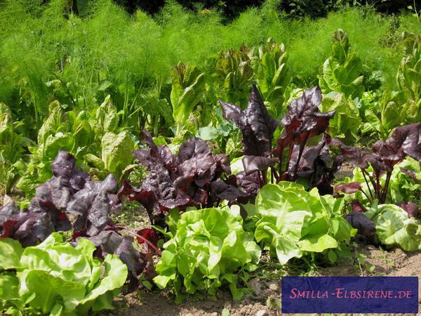 Die Planung Eines Selbstversorger-gartens | Stadt-gemüse Selbstversorger Garten Anlegen Obst Gemuse
