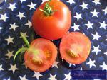 Rund-Tomate 'Harzfeuer'
