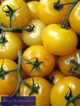 Gelbe Tomaten